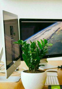 EDV-Arbeitsplatz mit grüner Pflanze